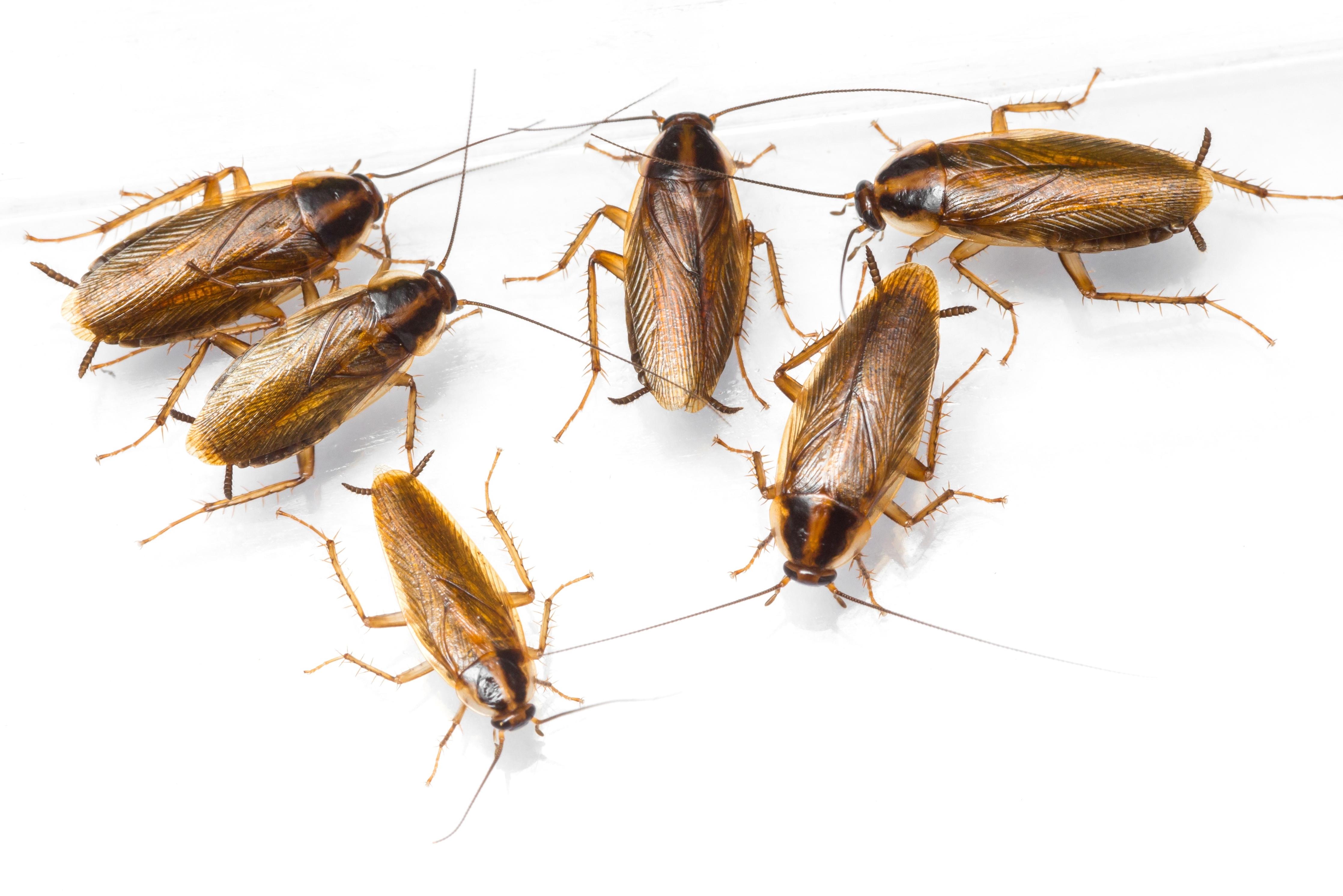 Domowy Sposób Na Mrówki Karaluchy Pająki I Inne Robaki W Naszych