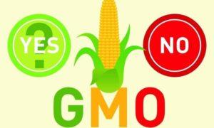 Szok! Ogromna ilość żywności GMO w naszych sklepach.