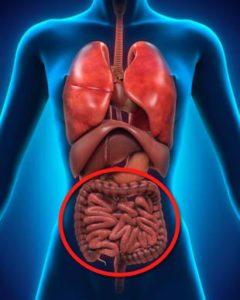 ból brzucha układ pokarmowy