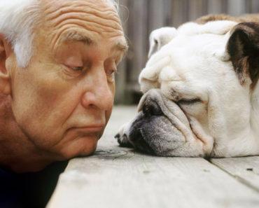 pies i człowiek tasiemiec
